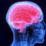 Exames que identificam fungos que afetam sistema nervoso entram no SUS